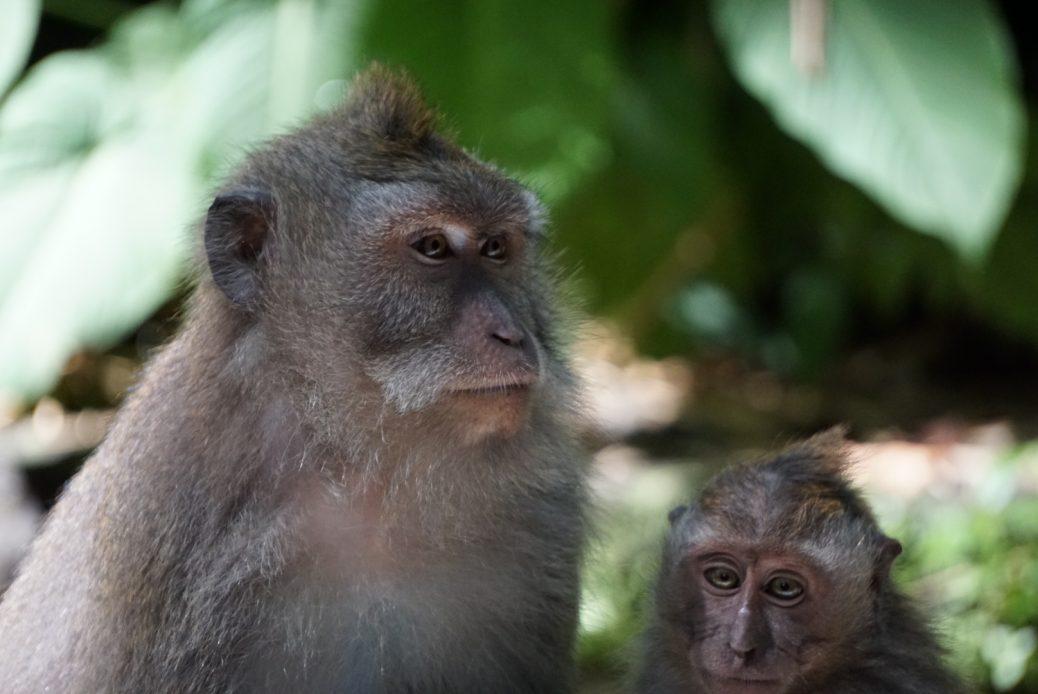 Ubuds Monkeyforest