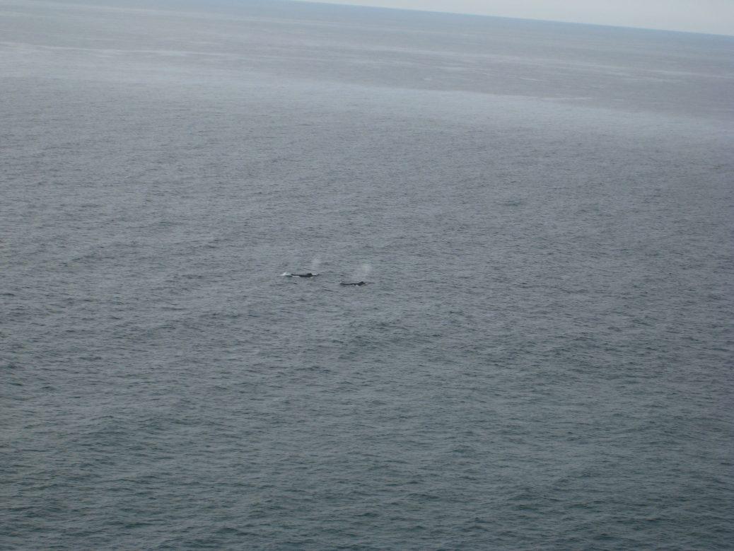 Wale vorm Leuchtturm in Byron Bay