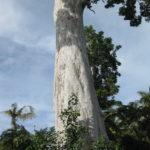Yang Na Baum
